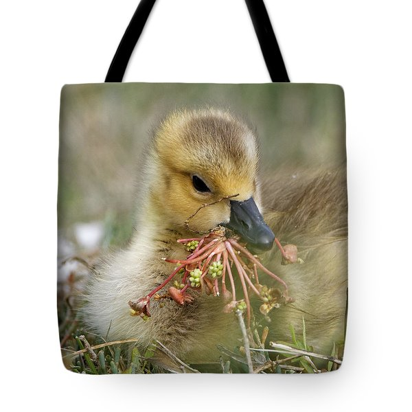 Baby Gosling Collecting Flowers Tote Bag