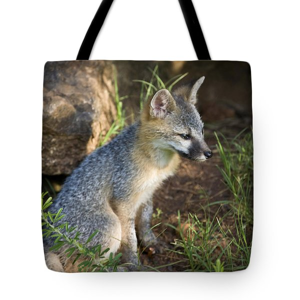 Baby Gray Fox Resting On Bluff Side Tote Bag