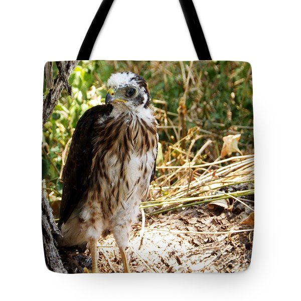 Baby Hawk Fell Out Of Nest Tote Bag