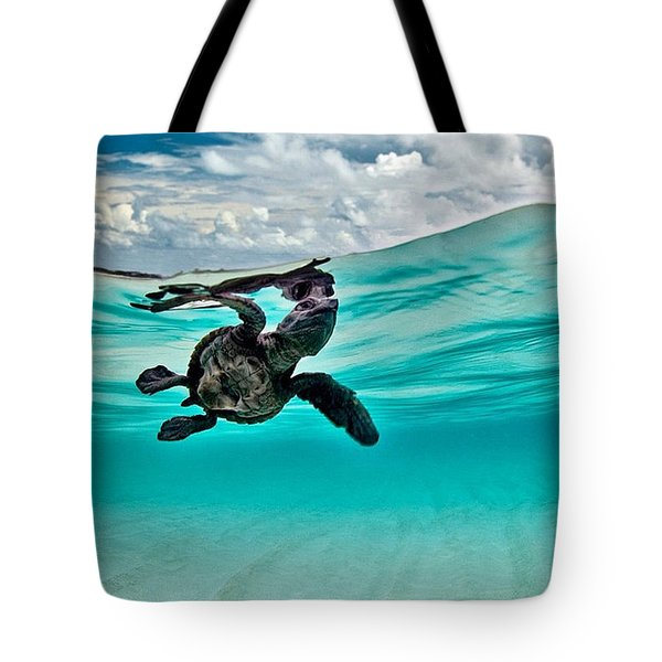 Baby Hawksbill Sea Turtle  Tote Bag