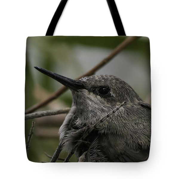 Baby Humming Bird Tote Bag