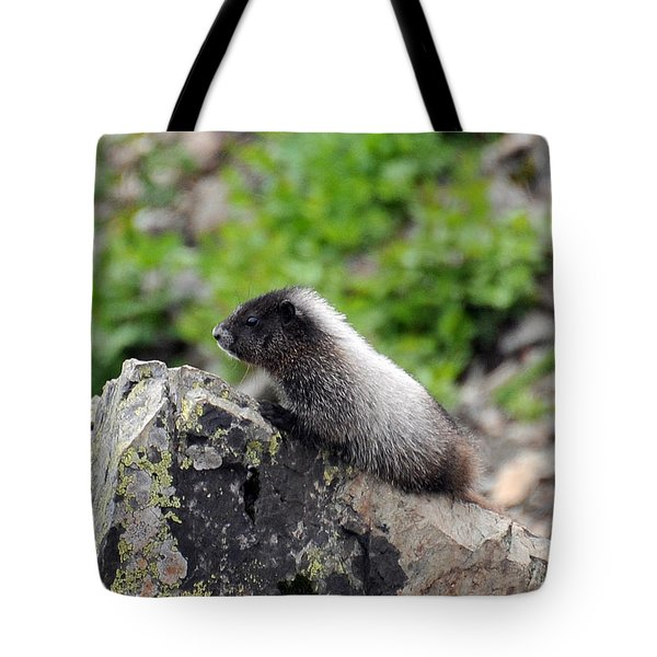 Tote Bag featuring the photograph Baby Marmot by Rebecca Parker