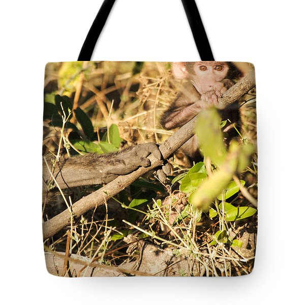 Baby Monkey Stare Tote Bag