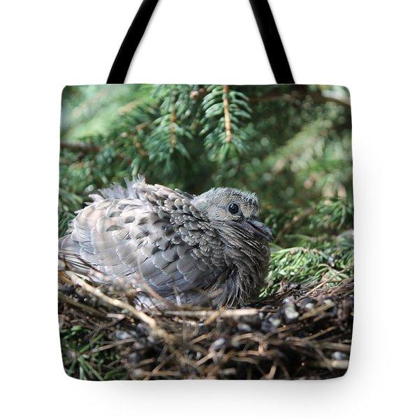 Baby Morning Dove Tote Bag
