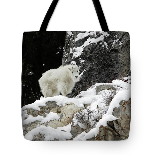 Tote Bag featuring the photograph Baby Mountain Goat by Ronnie and Frances Howard