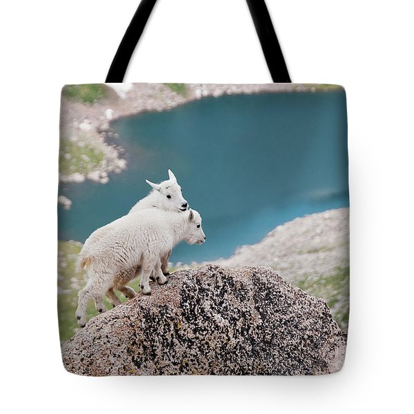 Baby Mountain Goats Tote Bag