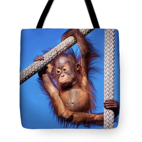 Baby Orangutan Hanging Out Tote Bag by Stephanie Hayes