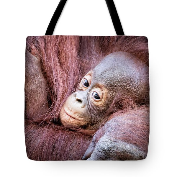 Baby Orangutan Tote Bag by Stephanie Hayes