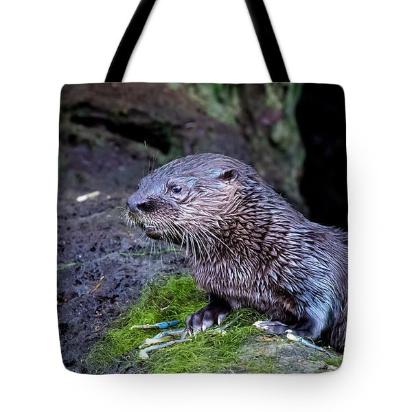 Baby Otter Tote Bag by Kelly Marquardt