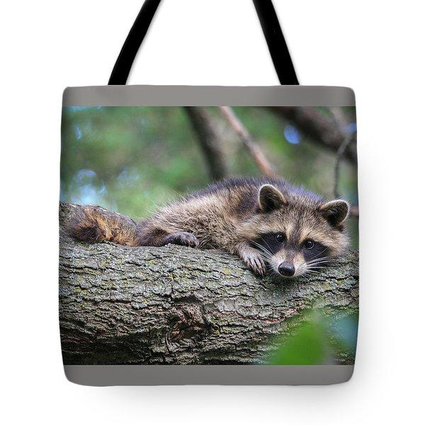 Baby Raccoon Tote Bag