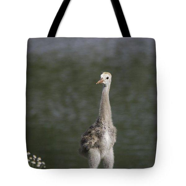 Baby Sandhill Crane Tote Bag