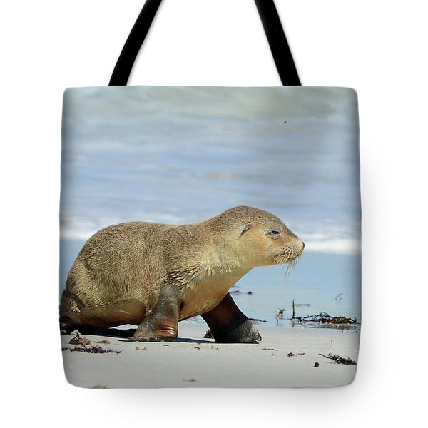 Baby Sea Lion On Seals Bay Tote Bag