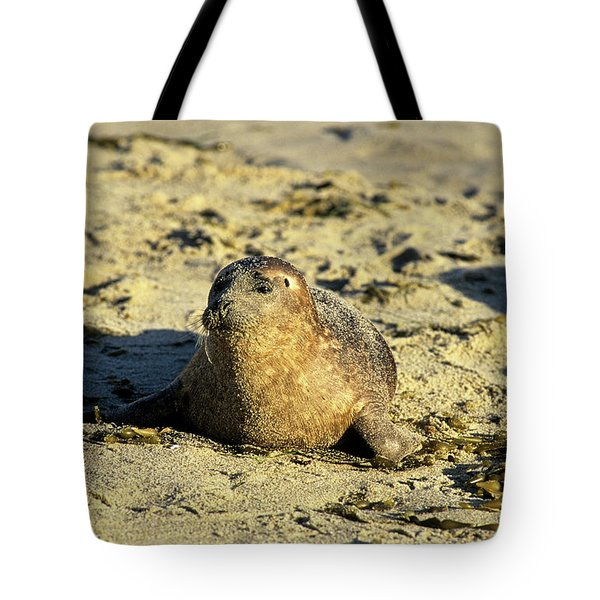 Baby Seal In Sand Tote Bag