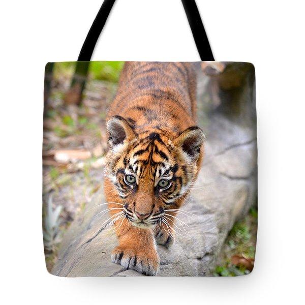 Baby Sumatran Tiger Cub Tote Bag
