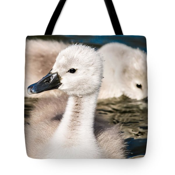 Baby Swan Close Up Tote Bag
