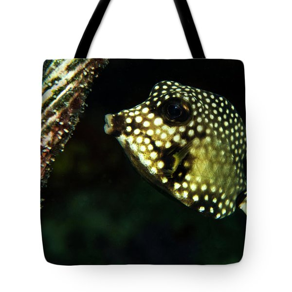 Tote Bag featuring the photograph Baby Trunk Fish by Jean Noren