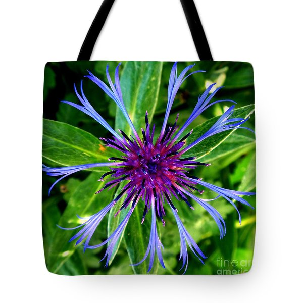 Bachelor Button Blossom Tote Bag