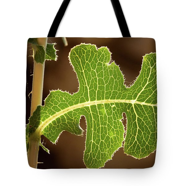 Tote Bag featuring the photograph Back Side Light On A Leaf At Sunset by Yoel Koskas