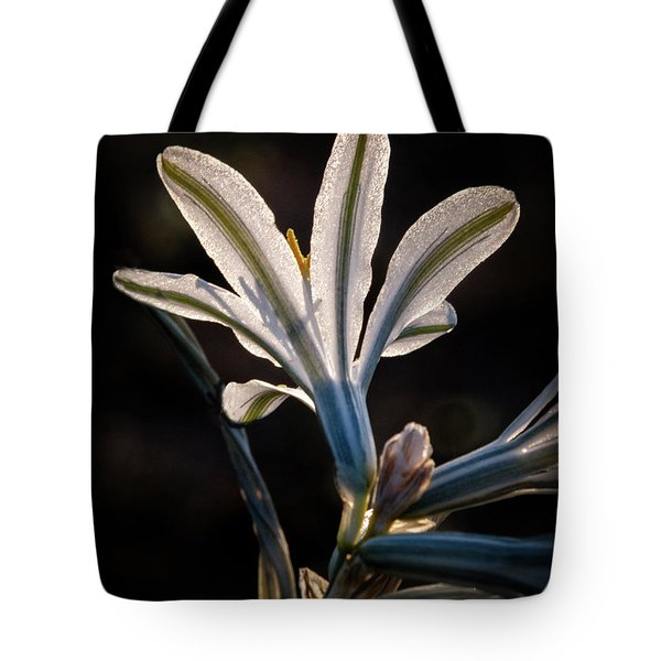 Tote Bag featuring the photograph Backlit Ajo Lily by Robert Bales