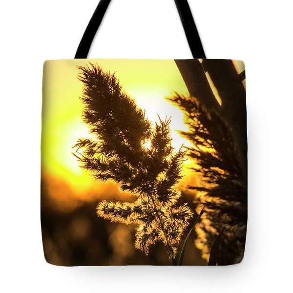 Tote Bag featuring the photograph Backlit By The Sunset by Zawhaus Photography