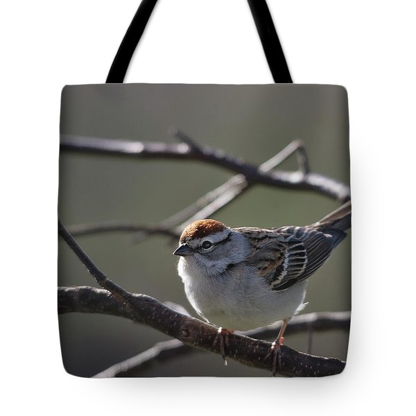 Tote Bag featuring the photograph Backlit Chipping Sparrow by Susan Capuano