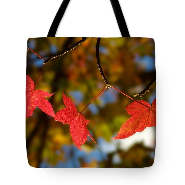 Backlit Glowing Red Maple Leaves Tote Bag