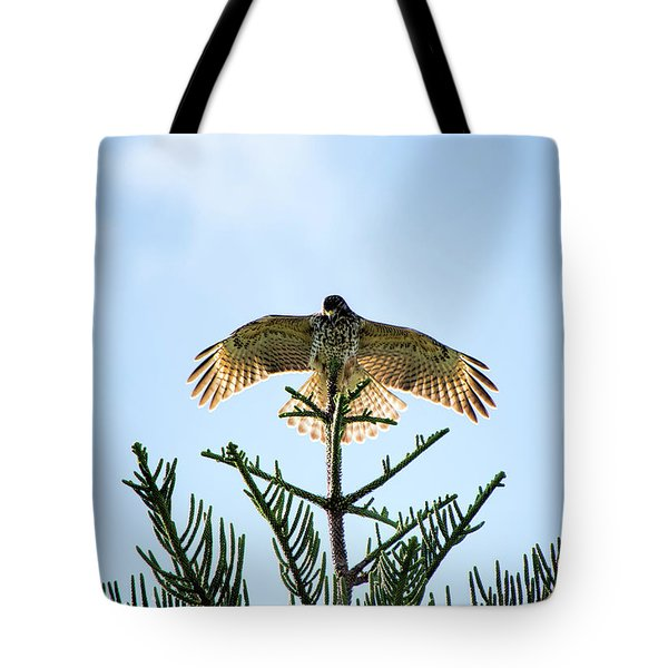 Backlit Landing Hawk Tote Bag
