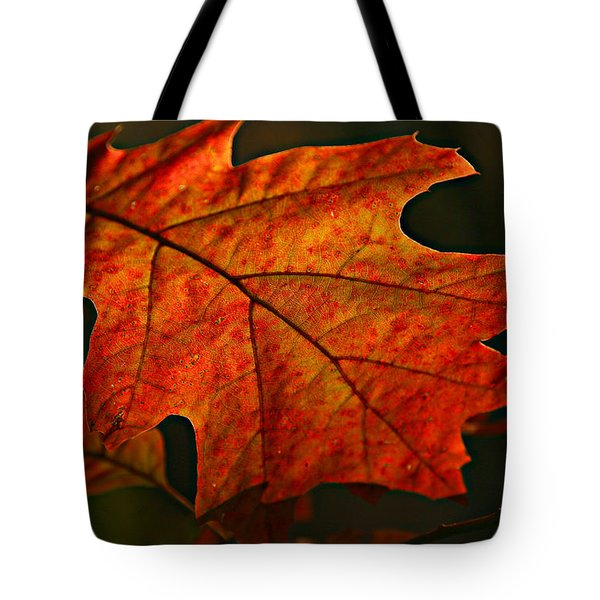 Tote Bag featuring the photograph Backlit Leaf by Shari Jardina