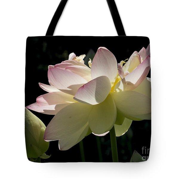 Backlit Lotus Blossom Tote Bag