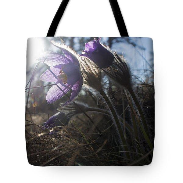 Backlit Pasque Flowers Tote Bag
