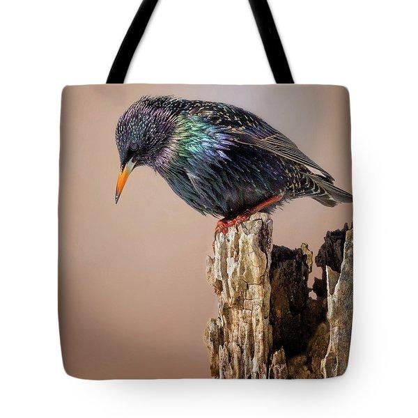 Backyard Birds European Starling Square Tote Bag