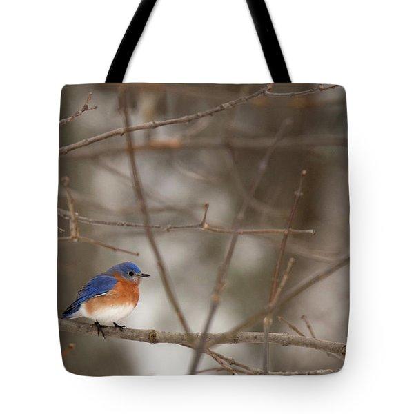 Backyard Blue Tote Bag