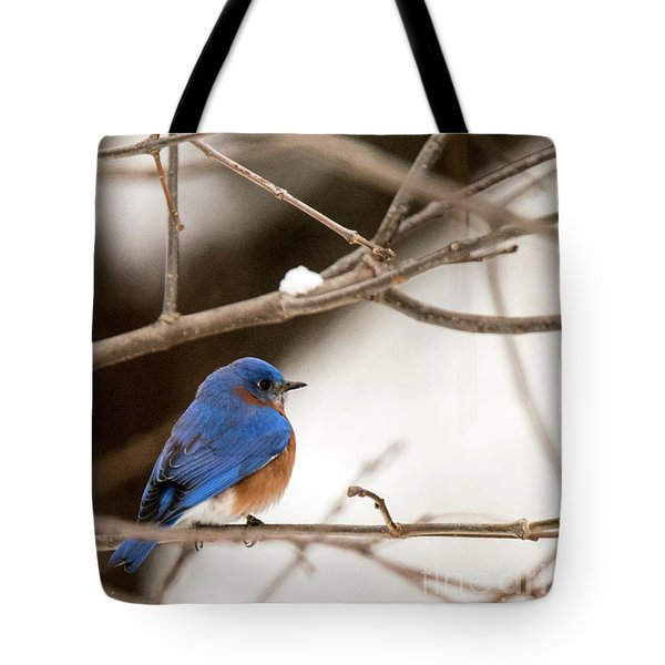 Backyard Bluebird Tote Bag