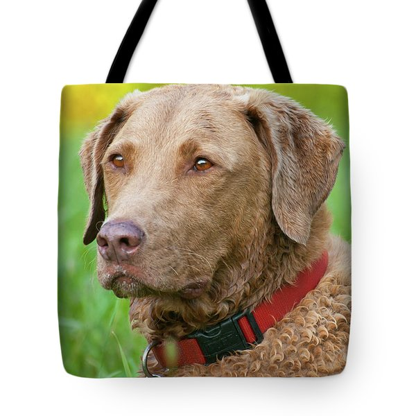 Tote Bag featuring the photograph Bailee 1149 by Guy Whiteley