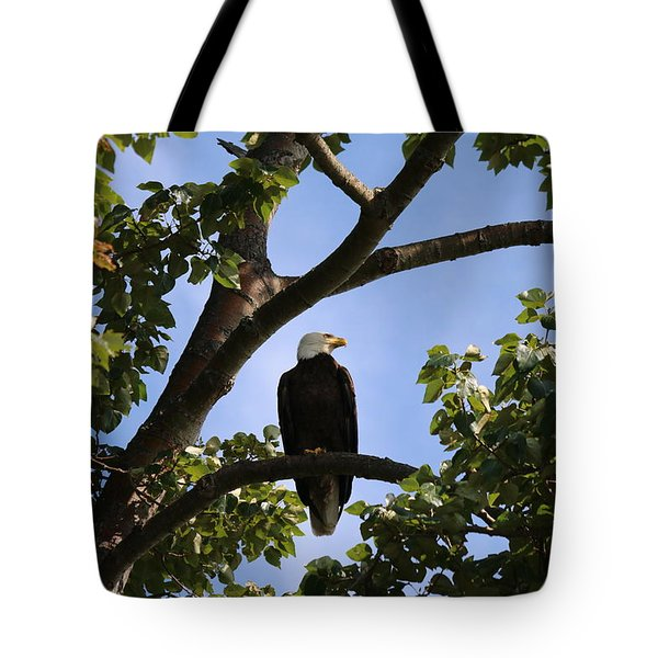 Bald Eagle - 1 Tote Bag by Chad Pooschke