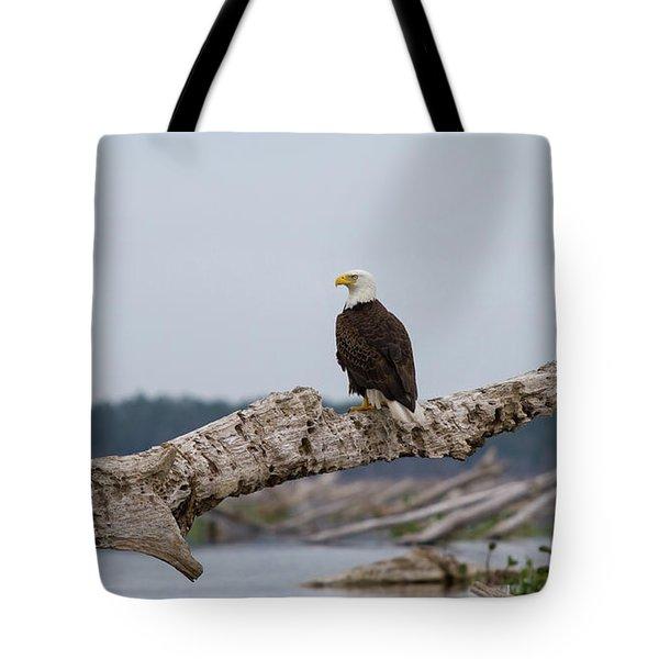 Bald Eagle #1 Tote Bag