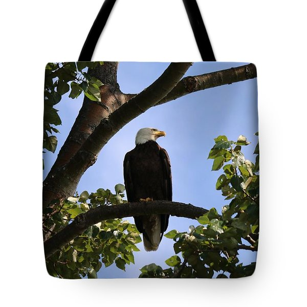 Bald Eagle - 2  Tote Bag by Chad Pooschke