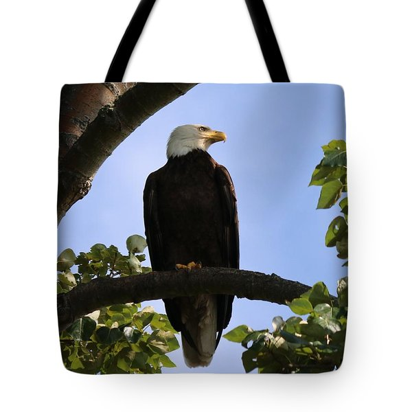 Bald Eagle - 3  Tote Bag by Chad Pooschke
