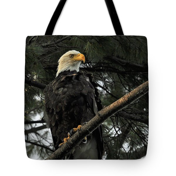 Bald Eagle Tote Bag by Glenn Gordon