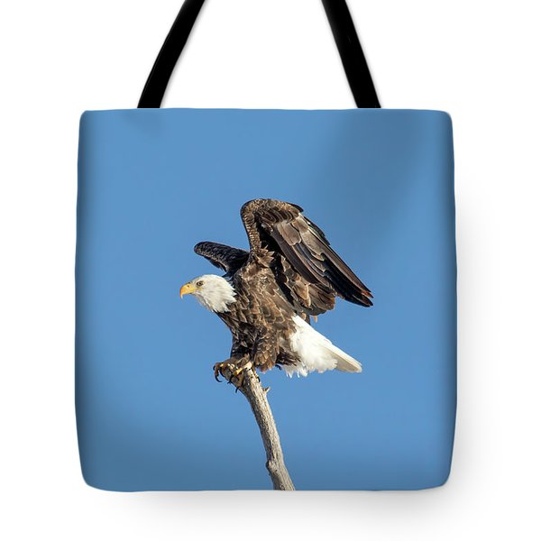 Bald Eagle Tote Bag