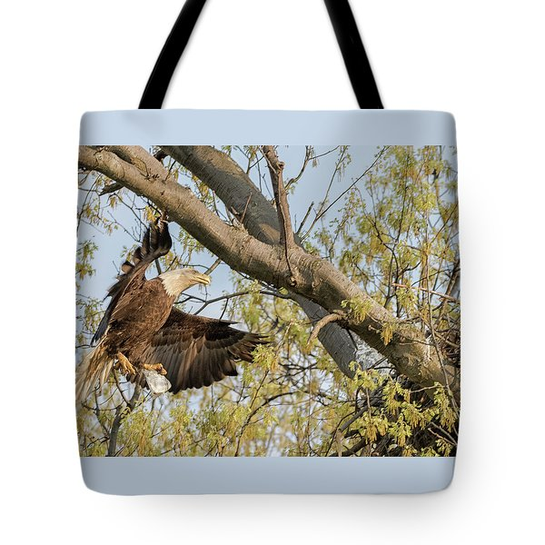 Bald Eagle Catch Of The Day  Tote Bag