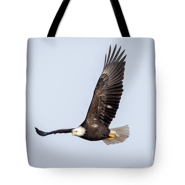 Bald Eagle Flying Over Horicon Marsh Tote Bag