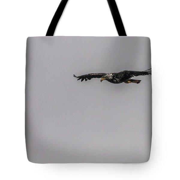 Bald Eagle Gliding Tote Bag by Timothy Latta