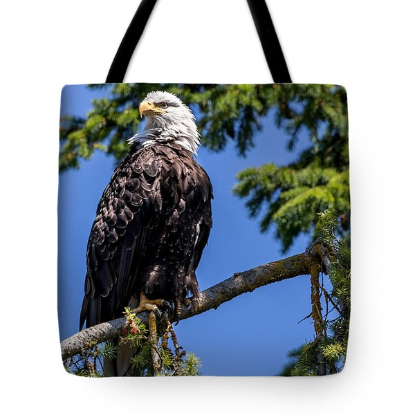 Bald Eagle In Evergreen Tote Bag