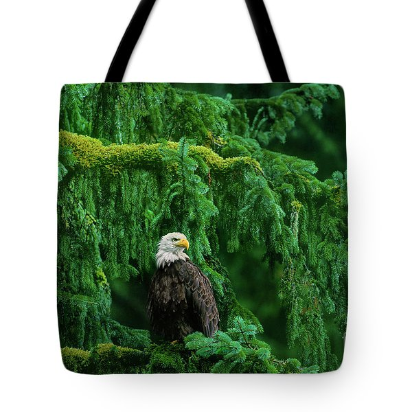 Tote Bag featuring the photograph Bald Eagle In Temperate Rainforest Alaska Endangered Species by Dave Welling