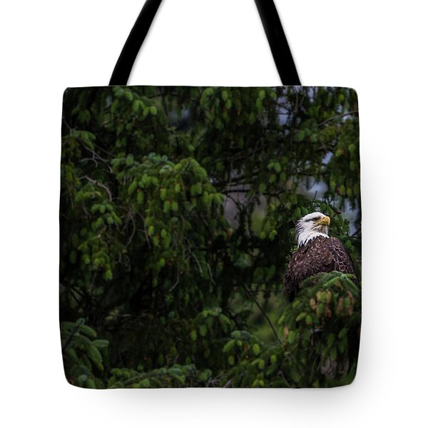 Bald Eagle In The Tree Tote Bag by Timothy Latta