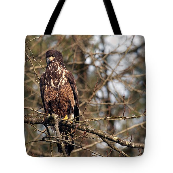 Bald Eagle Juvenile 2 Tote Bag by Sharon Talson