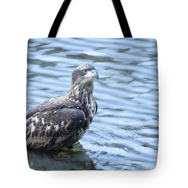 Bald Eagle Juvenile Tote Bag