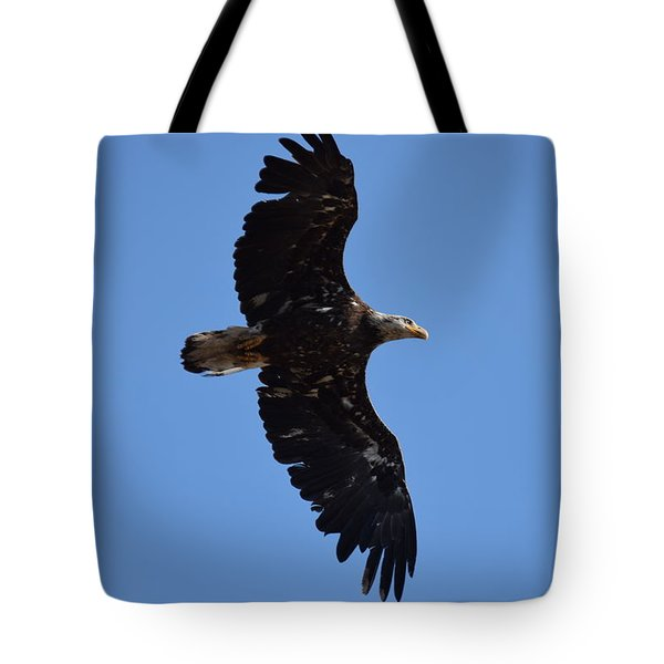 Tote Bag featuring the photograph Bald Eagle Juvenile Soaring by Margarethe Binkley