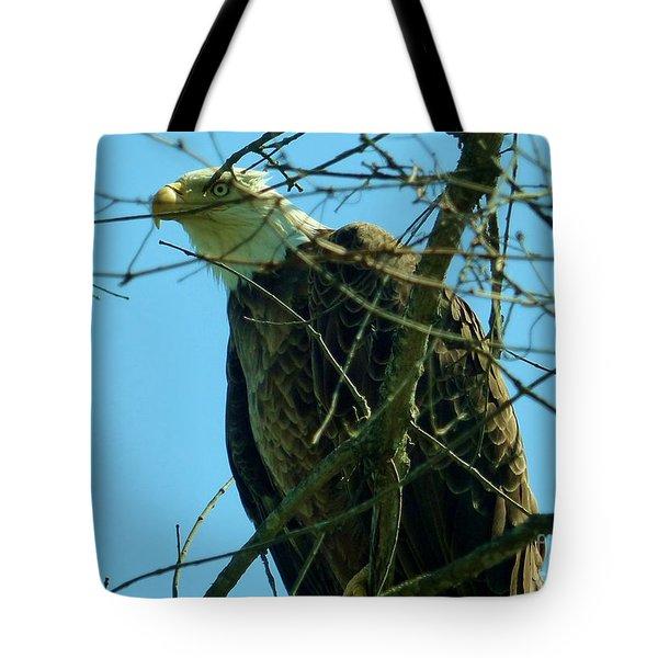 Bald Eagle Keeping Guard Tote Bag